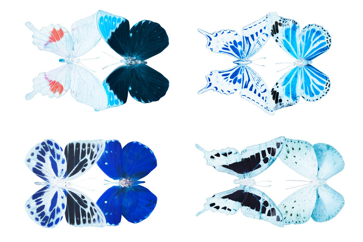 Canvas Print MISS BUTTERFLY X-RAY DUO White II