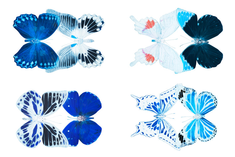 Canvas Print MISS BUTTERFLY X-RAY DUO White III
