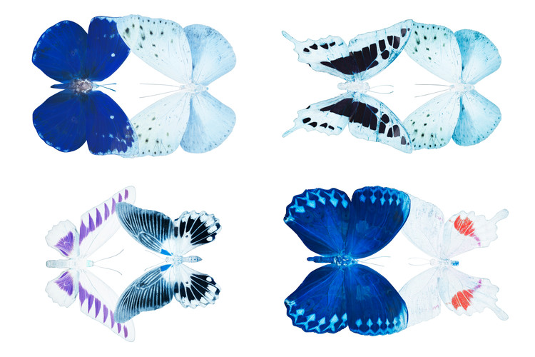 Canvas Print MISS BUTTERFLY X-RAY DUO White IV