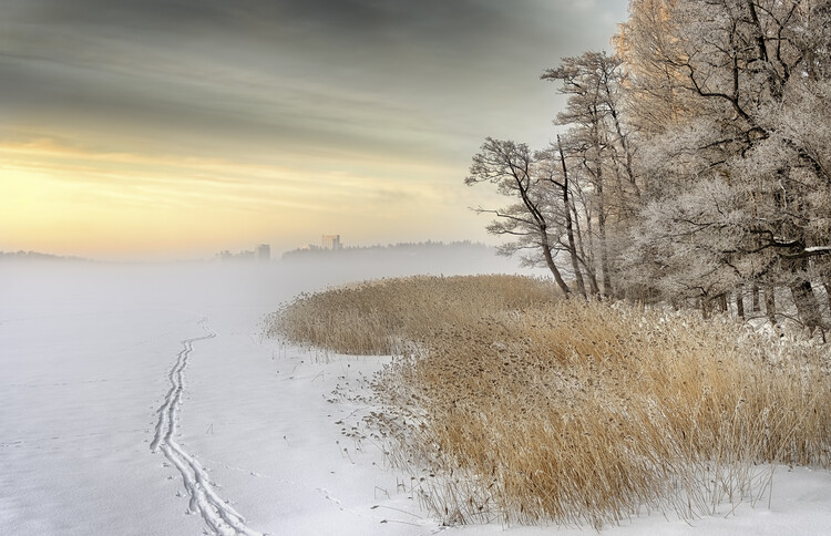 Canvas Print Misty winter morning