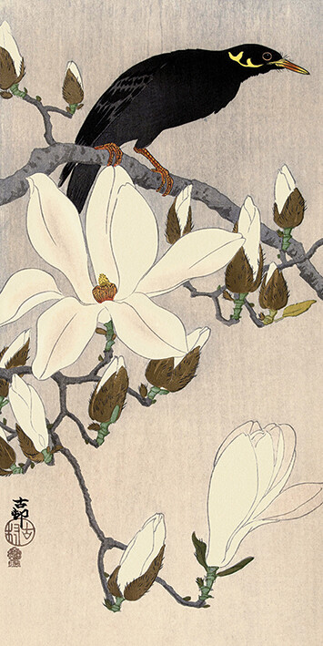 Canvas Print Ohara Koson - Myna on Magnolia Branch