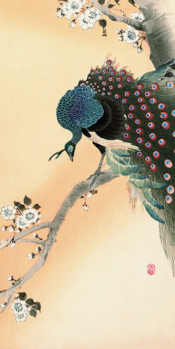 Canvas Print Ohara Koson - Peacock on a Cherry Blossom Tree