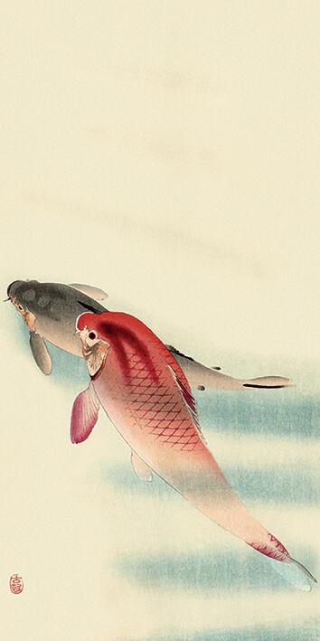 Canvas Print Ohara Koson - Two Carp
