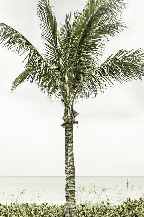 Palm Tree at the beach | Vintage Canvas Print