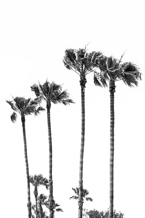 Palm Trees at the beach Canvas Print