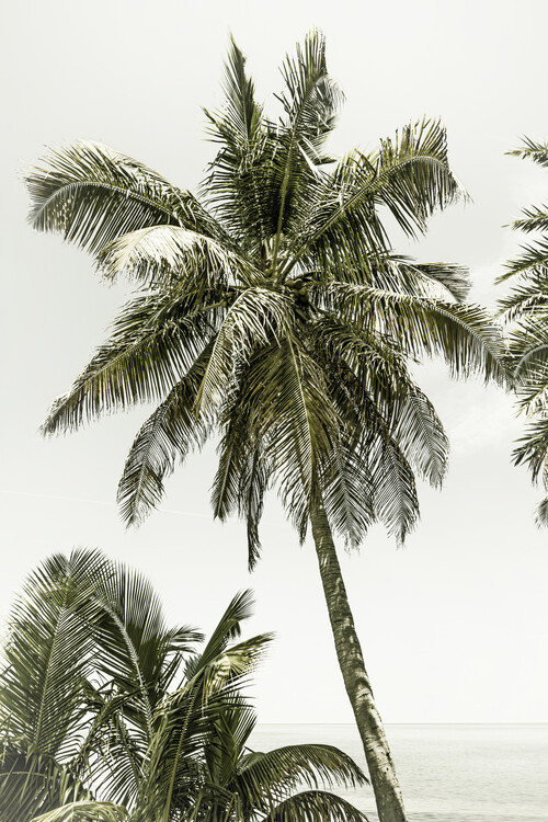 Palm Trees at the beach | Vintage Canvas Print