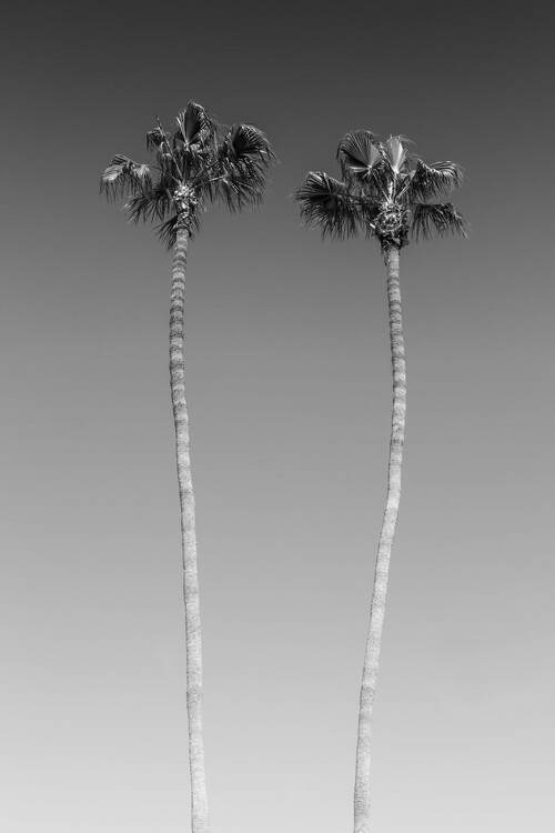 Palm Trees In Black & White Canvas Print