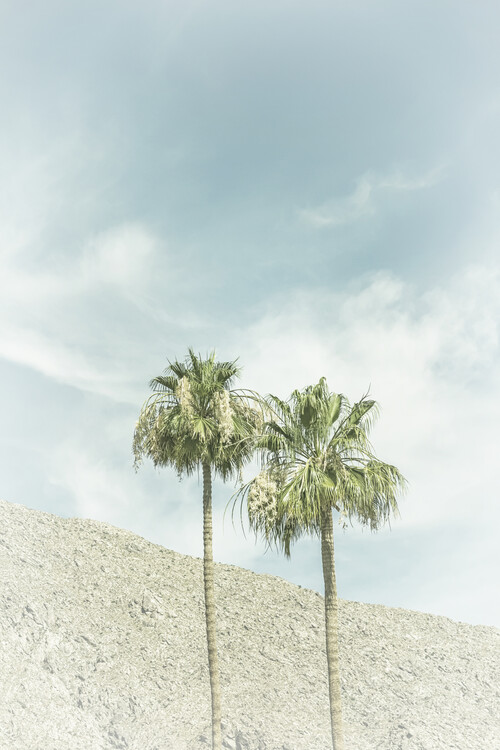 Palm Trees in the desert | Vintage Canvas Print