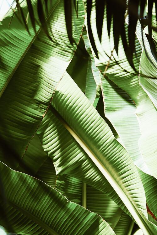Palm wonder Canvas Print