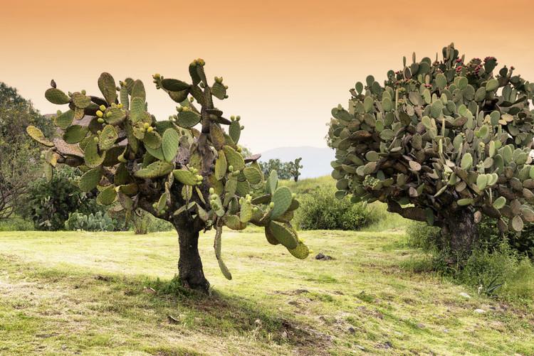 Canvas Print Prickly Pear Cactus