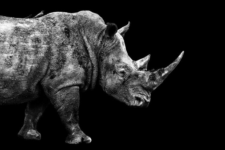 Canvas Print Rhino Black Edition