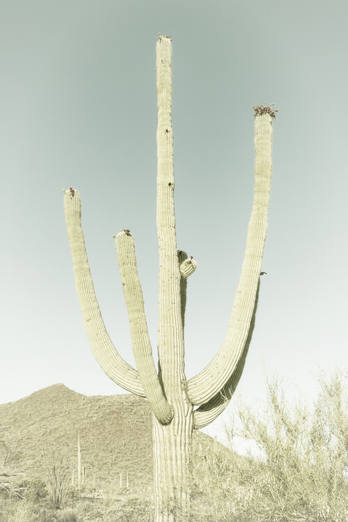 SAGUARO NATIONAL PARK Giant Saguaro | Vintage Canvas Print