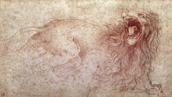 Canvas Print Sketch of a roaring lion