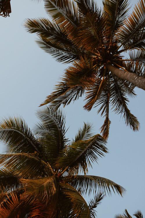 Sky of palms Canvas Print