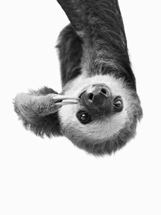 Canvas Print Sloth BW