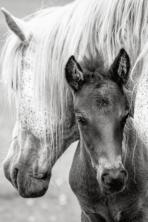 Canvas Print The Foal