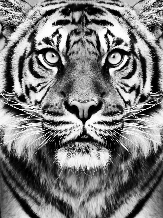 Canvas Print Tiger BW