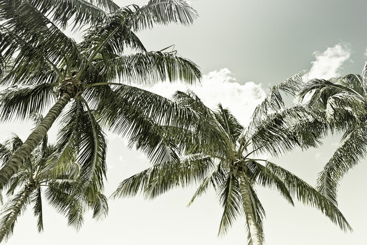Vintage Palm Trees Canvas Print