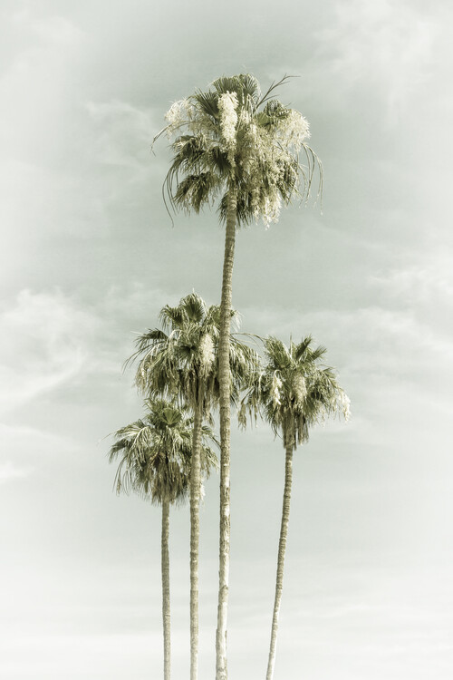 Vintage Palm Trees Skyhigh Canvas Print