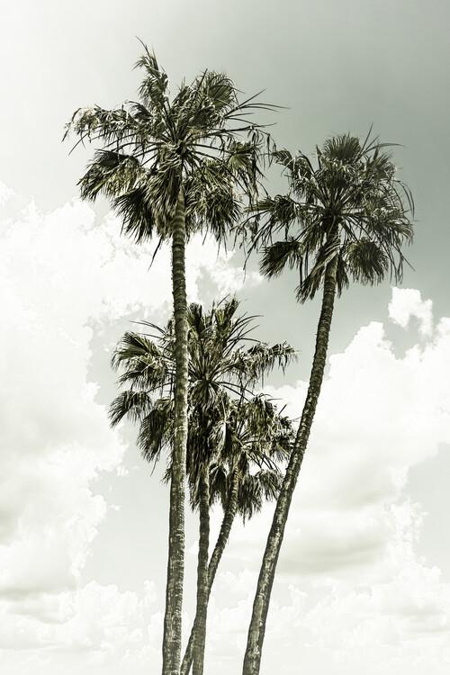 Vintage palm trees summertime Canvas Print