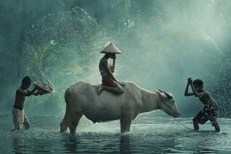 Canvas Print Water Buffalo