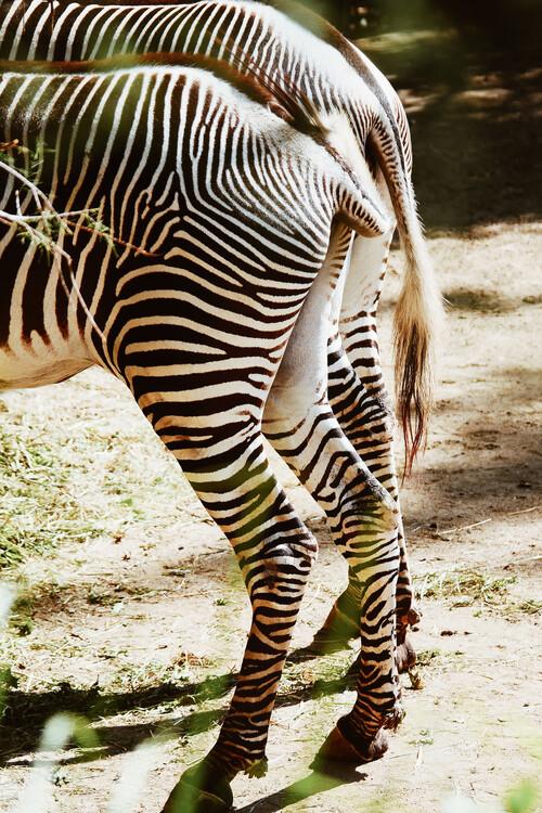 Zebra tails Canvas Print