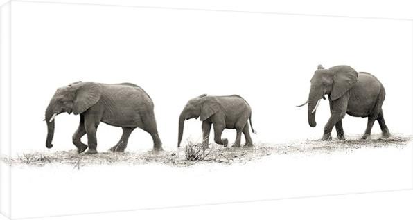 Mario Moreno - The Elehants Canvas-taulu