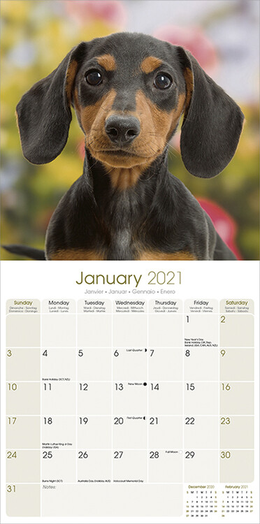 Magnet and Steel Wall Calendar 16 months 2020 The Dachshund