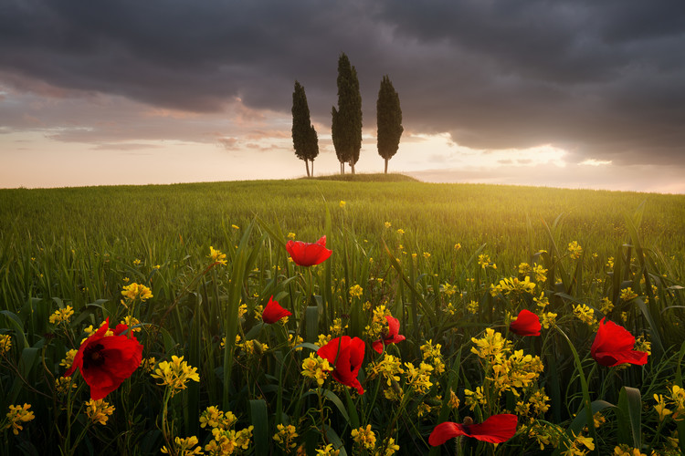 Papel de parede Blooming Tuscany