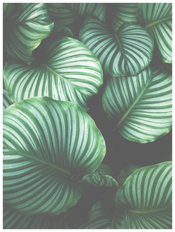 Papel de parede Border green leaves