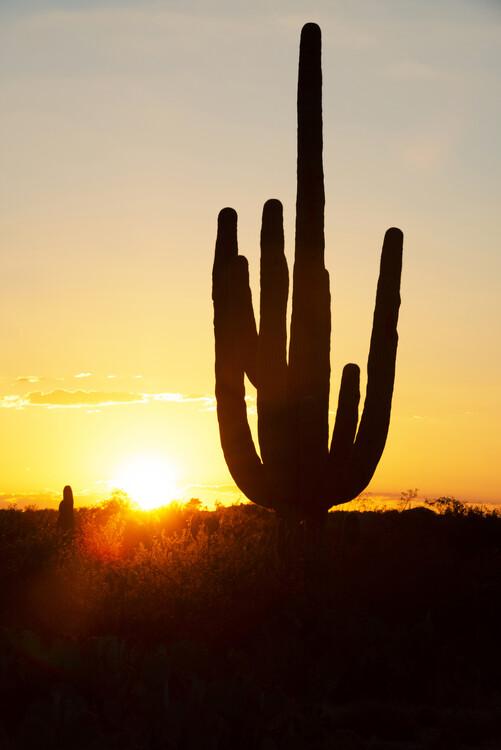Murais de parede Cacti Cactus Collection - Cactus Sunrise