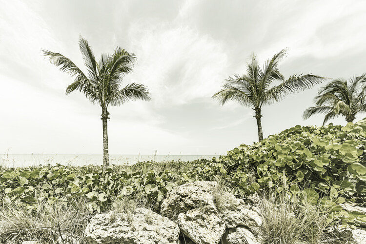 Papel de parede Captiva Island | Vintage
