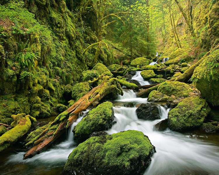 Decoração de parede Green Canyon Cascades