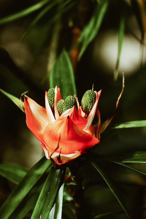 Papel de parede Orange Flower