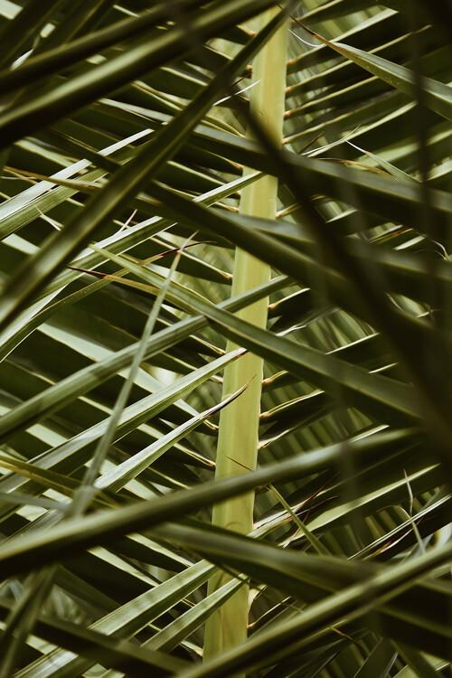 Papel de parede Palms in disguise