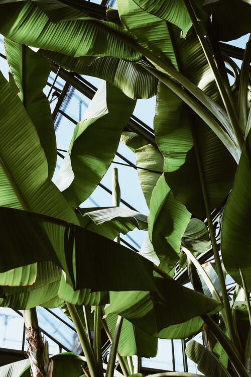 Papel de parede Roof of palms