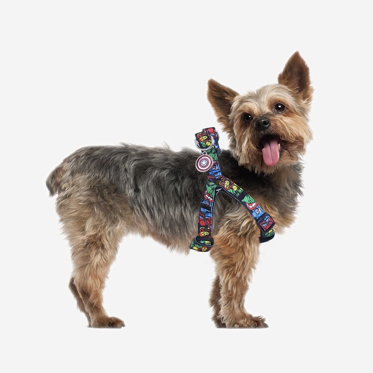 Dog Petral Marvel