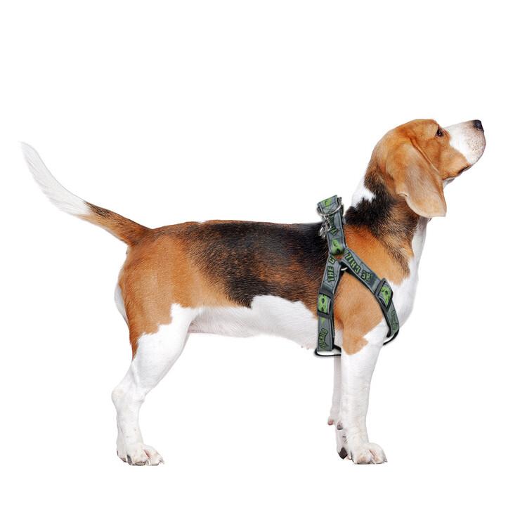 Dog Petral - Star Wars: The Mandalorian