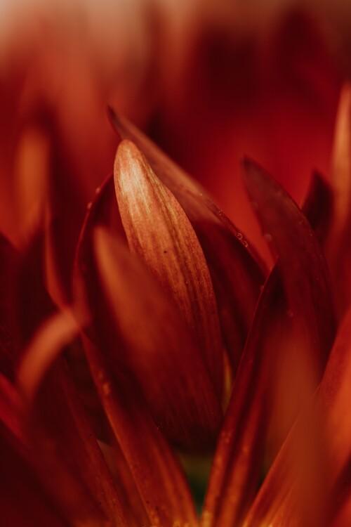 Eksklusiiviset taidevalokuvat Abstract detail of red flowers