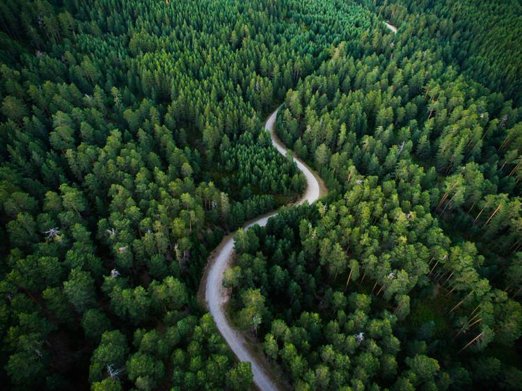 Eksklusiiviset taidevalokuvat Aerial road crossing the forest