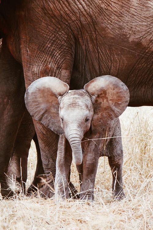 Eksklusiiviset taidevalokuvat Baby Elephant