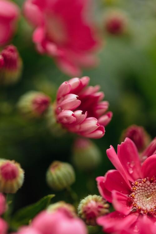 Eksklusiiviset taidevalokuvat Beauty or red flowers
