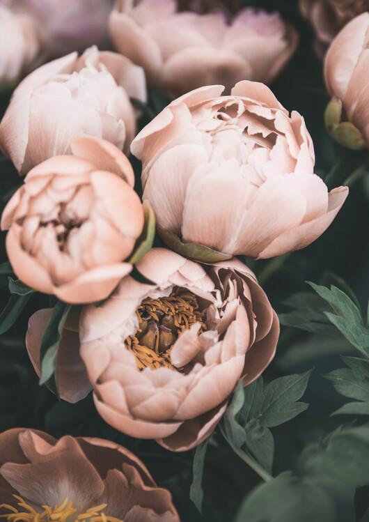 Eksklusiiviset taidevalokuvat Bouquet