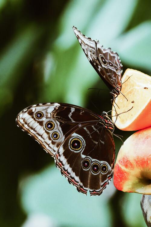 Eksklusiiviset taidevalokuvat Butterfly couple