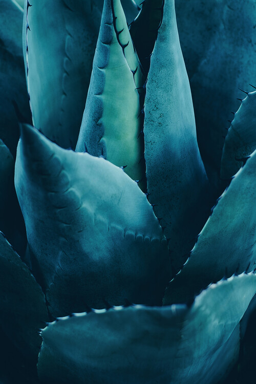 Eksklusiiviset taidevalokuvat Cactus No 4