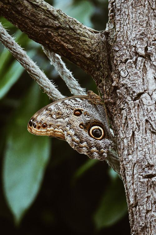 Eksklusiiviset taidevalokuvat Camouflaged butterfly