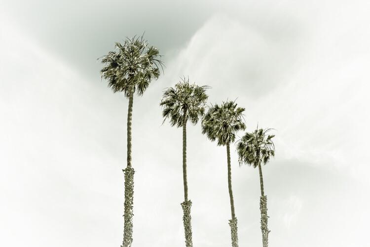 Eksklusiiviset taidevalokuvat Coastal Palm Trees | Vintage