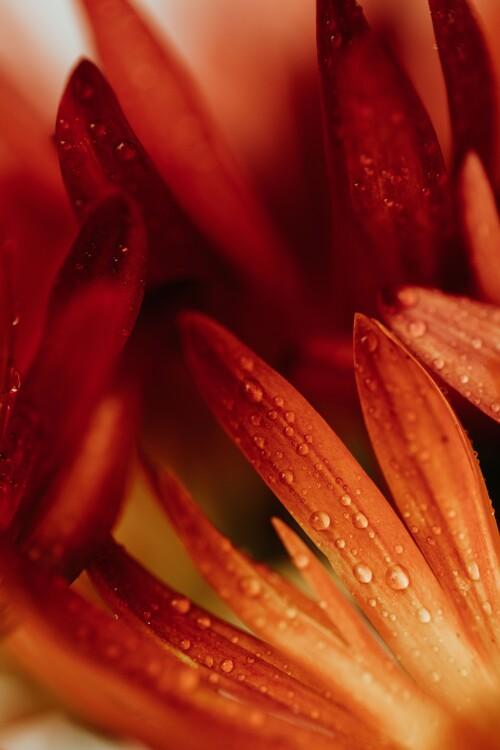 Eksklusiiviset taidevalokuvat Detail of red flowers