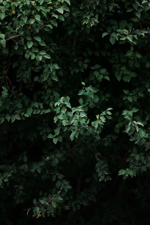 Eksklusiiviset taidevalokuvat Green leafs