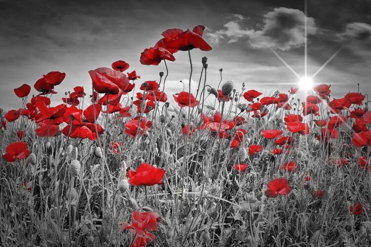 Eksklusiiviset taidevalokuvat Idyllic Field Of Poppies With Sun